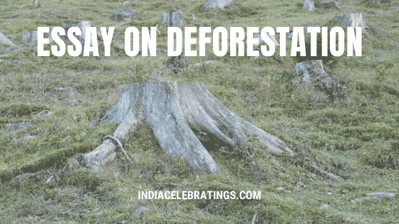 Essay on Deforestation | Causes & Effects of Cutting Trees