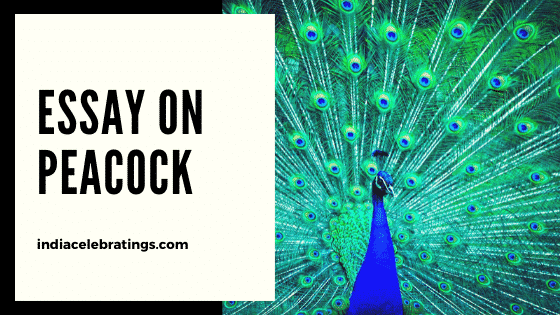 Essay on Peacock | 10 Lines, Short Essay & Paragraph